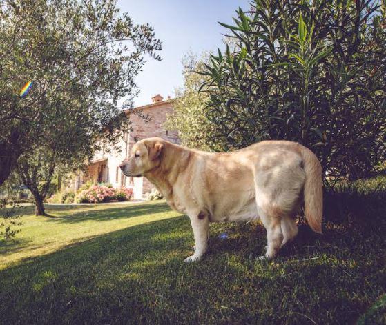 Hotel cani ammessi
